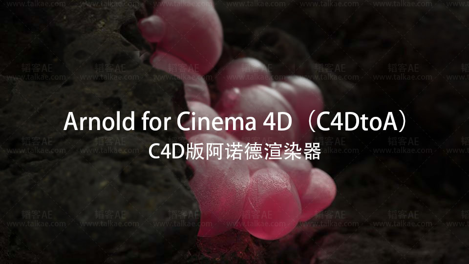 Solid Angle C4D to Arnold v3.0.1 for Cinema 4D R19-R21 Win 简称 C4DtoA C4D插件-第1张